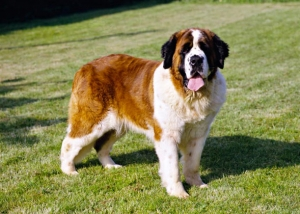 http://www.vetstreet.com/our-pet-experts/10-large-dog-breeds-that-are-gentle-giants
